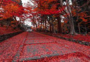 autumn, осень, red, tree, листья, красные, деревья