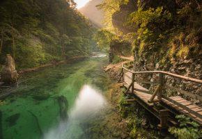Обои Река, Горы, ветки, деревья