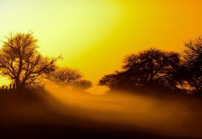 Обои небо, закат, свет, туман, деревья