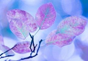 Обои Листья, ветка, почки, голубой фон