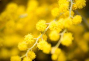 ветка, цветы, желтые, макро