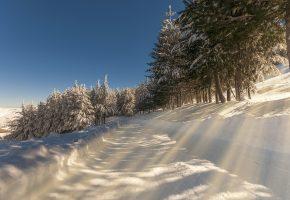 Обои зима, дорога, деревья, лучи солнца, пейзаж