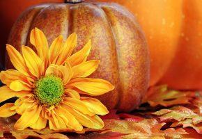 Урожай, тыква, осень, листья, подсолнух