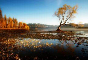 Обои деревья, листья, осень, вода, залив