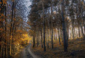 Обои Лес, дорога, листья, осень, деревья, ветки