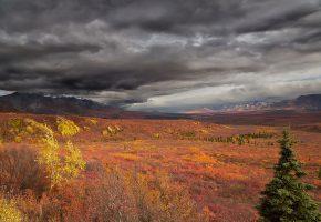 Обои аляска, горы, деревья, поле, тучи, осень, пейзаж