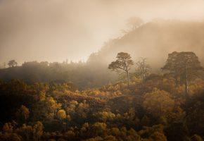 Обои лес, туман, осень, деревья, холмы
