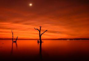 Ночь, озеро, Луна, деревья, огни