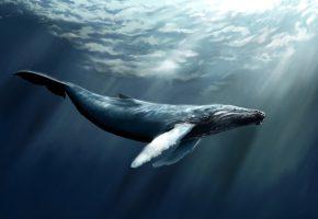 Обои рыба, кит, море, кашалот, вода, арт