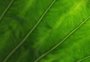 Обои Прожилки, лист, зеленый, капли
