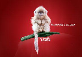 Обои год обезьяны, Новый год, 2016, Happy New Year