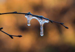 Обои ветки, лёд, почки, фон, весна