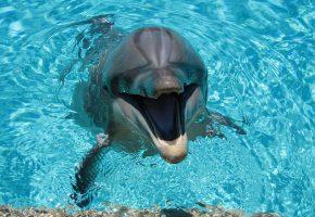 дельфин, улыбка, море, вода, зубы