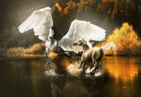 Обои арт, пегас, брызги, крылья, вода, лошади