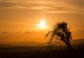 Обои небо, солнце, закат, горы, дерево