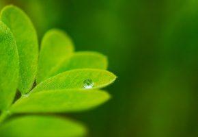 Обои зелень, макро, листик, капля, растения, фон