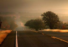 Обои шоссе, дорога, дерево, трасса, туман