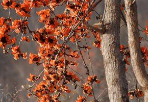 Обои деревья, лепестки, весна, цветы