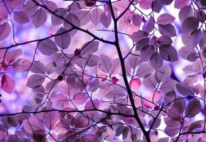 Обои ветки, листья, дерево, краски