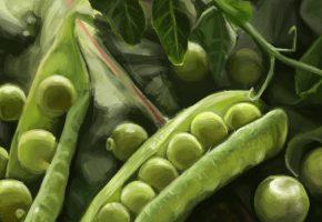 Обои арт, Живопись, зеленый, горошек, стрючок, еда