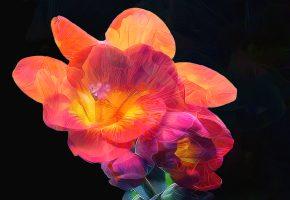 цветок, лепестки, краски, линии