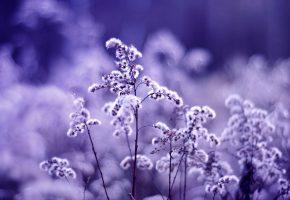 Обои Сиреневые, сухоцветы, flowers, поле