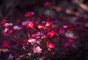 Обои природа, лепестки, краски, растение