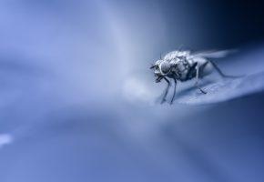 муха, лапки, крылья, макро, фон