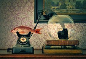 Обои телефон, рыба, трубка, аквариум