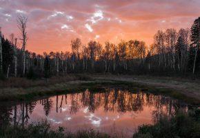 Обои озеро, ночь, пейзаж, деревья, отражение