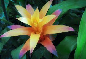 Обои Flower, colors, цветок, листья, краски