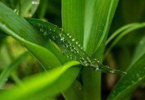 Обои Листья, капли, макро, зелень, leaves, drops, macro, green