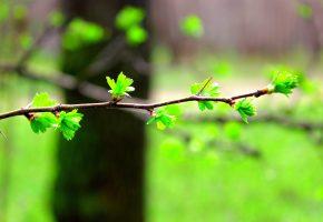 Обои Ветка, листья, весна, фон