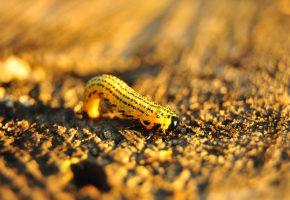 пенёк, гусеница, жёлтый, макро