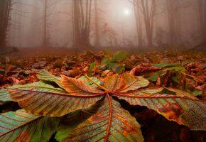 Обои осень, листья, каштан, деревья, туман, лес
