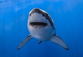 Обои море, акула, океан, челюсти, природа