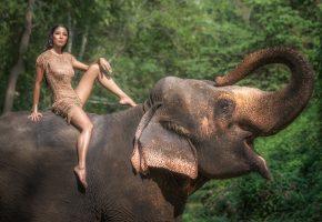 Обои слон, хобот, девушка, лицо, ножки, красотка, платье
