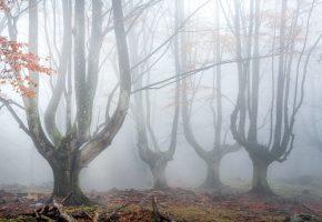 Обои деревья, лес, туман, листья, осень