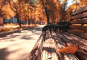 Обои осень, лист, парк, лавочка, макро