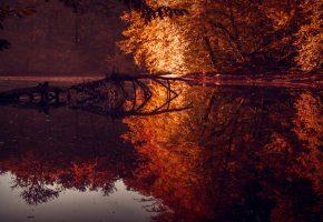 Обои лес, осень, отражение, озеро, деревья