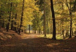 осень, листья, парк, деревья, дорога