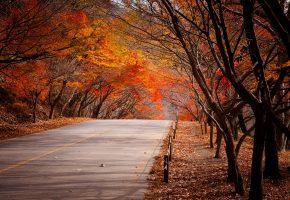 осень, лес, деревья, листья, дорога, пейзаж