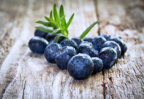 макро, черника, ягода, капли, дерево
