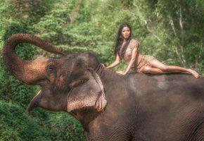 слон, азия, девушка, позирует, хобот