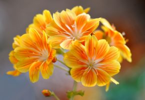 природа, цветы, соцветие, лепестки, макро
