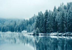 зима, пейзаж, озеро, лес, деревья, снег