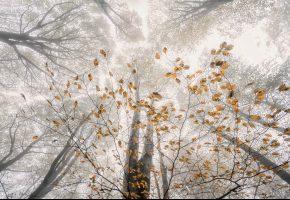 лес, осень, ветки, деревья, дымка, листва