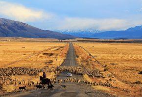 дорога, машина, овцы, горы, степь