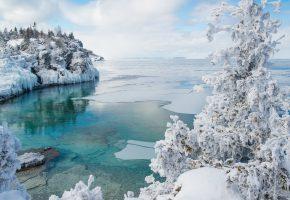 залив, зима, снег, лёд, дерево, пейзаж