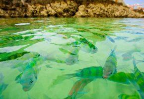 рыбы, вода, прозрачная, плавают, много